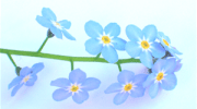 Marchwood forget-me-nots