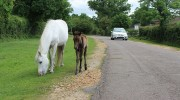 Nearly 10,000 caught speeding in bid to stop New Forest animal deaths