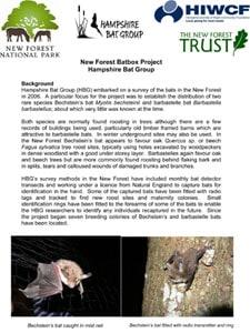 New Forest Bat Box update