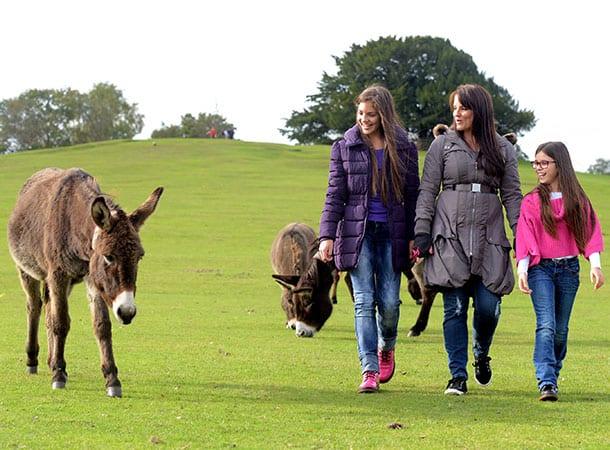 family walk looking at donkeys at Boltons bench