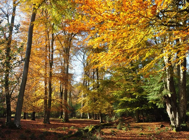 trees in autumn colours